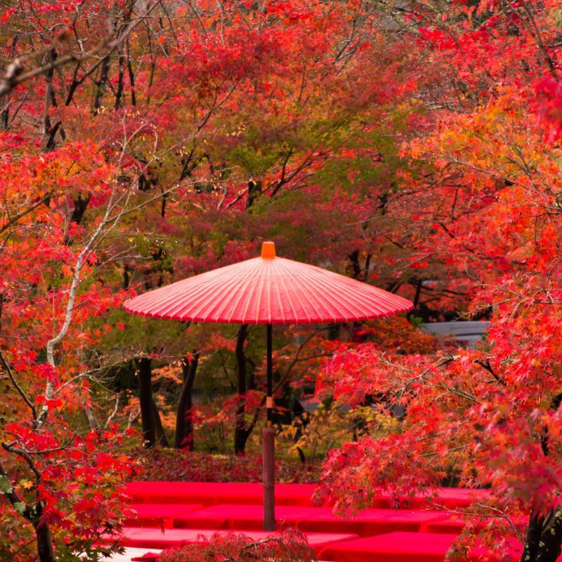 Hotel Nikko Princess Kyoto | Luxury Hotel in Kyoto