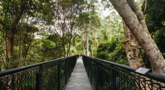 Tamborine Rainforest Skywalk