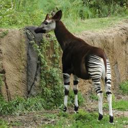 حديقة حيوان لوري بارك