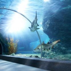 Thủy cung SEA LIFE Bangkok Ocean World