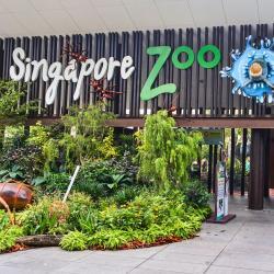 גן החיות של סינגפור