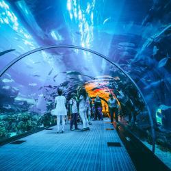 Aquário de Dubai e Zoológico subaquático