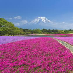 Província de Yamanashi 95 casas de temporada