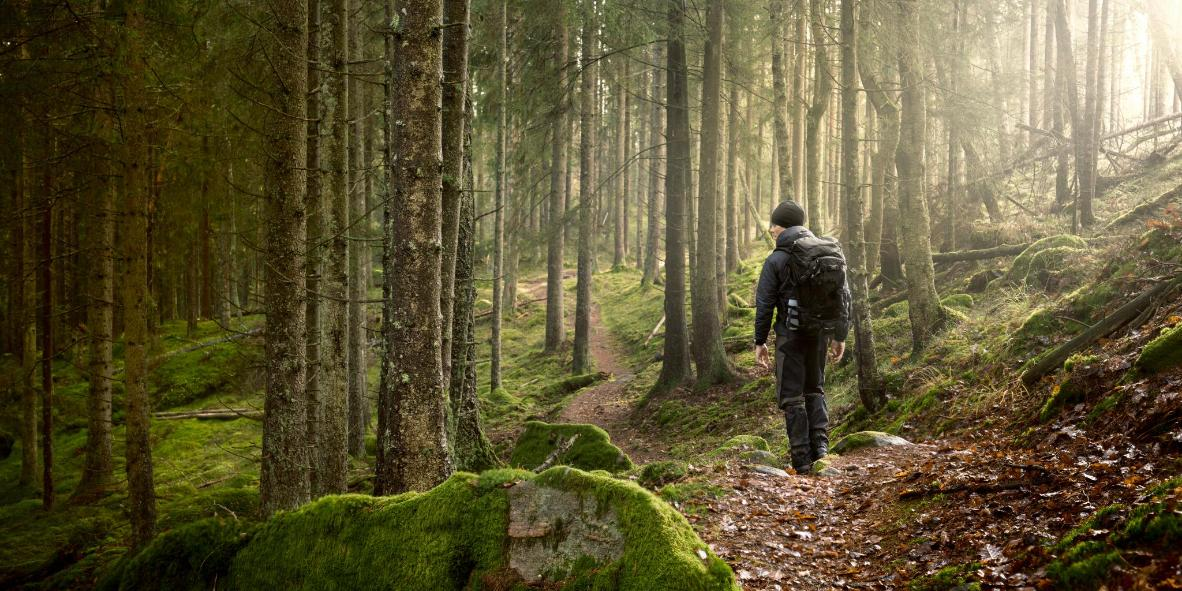 Skelghyll Woods