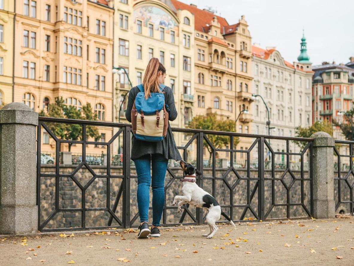 Os moradores de Praga acham chique dar nomes ingleses aos seus cãezinhos