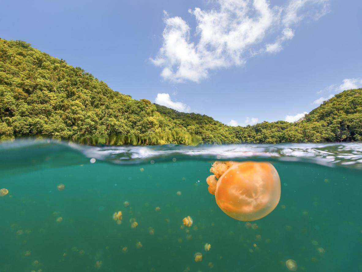 As águas-vivas formam uma comunidade subaquática por si só