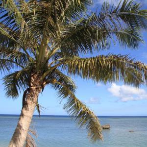 Estados Federados da Micronésia