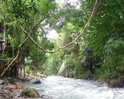 Tree Tops River Huts