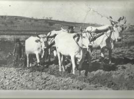 Agriturismo Massoserpente, Barberino di Mugello