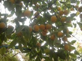 By The Lemon Tree, Amman