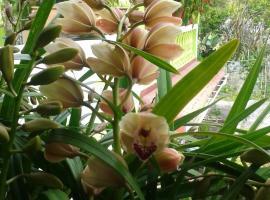 Chambres et tables d'hôtes l'Orchidée Rose, Salazie