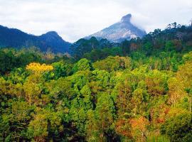 Mt Warning Rainforest Retreat, Uki