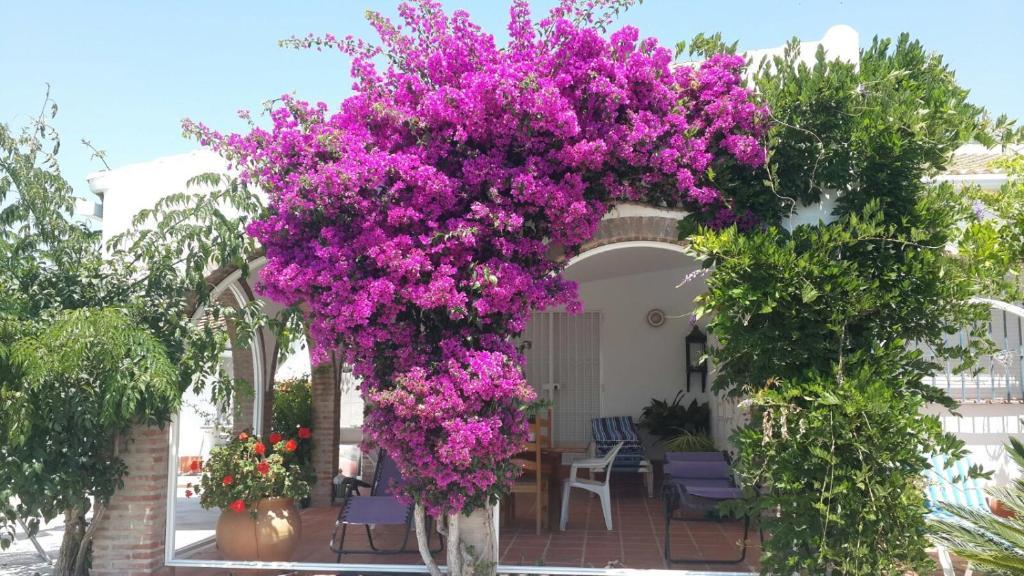 Casa de campo casa de los robles (España Sedella) - Booking.com