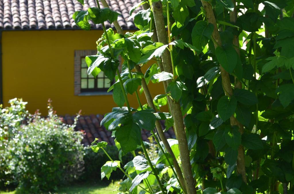 Casa de campo El bellucu (España Cangas de Onís) - Booking.com