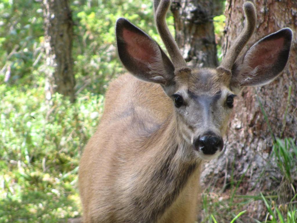 Apartment Doe A Deer Accommodation Jasper Canada