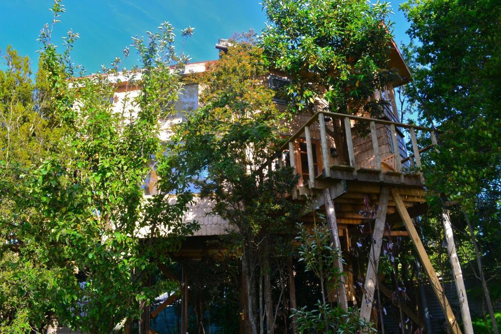 Casa o chalet la casa del rbol de chilo for Casa del arbol cuenca