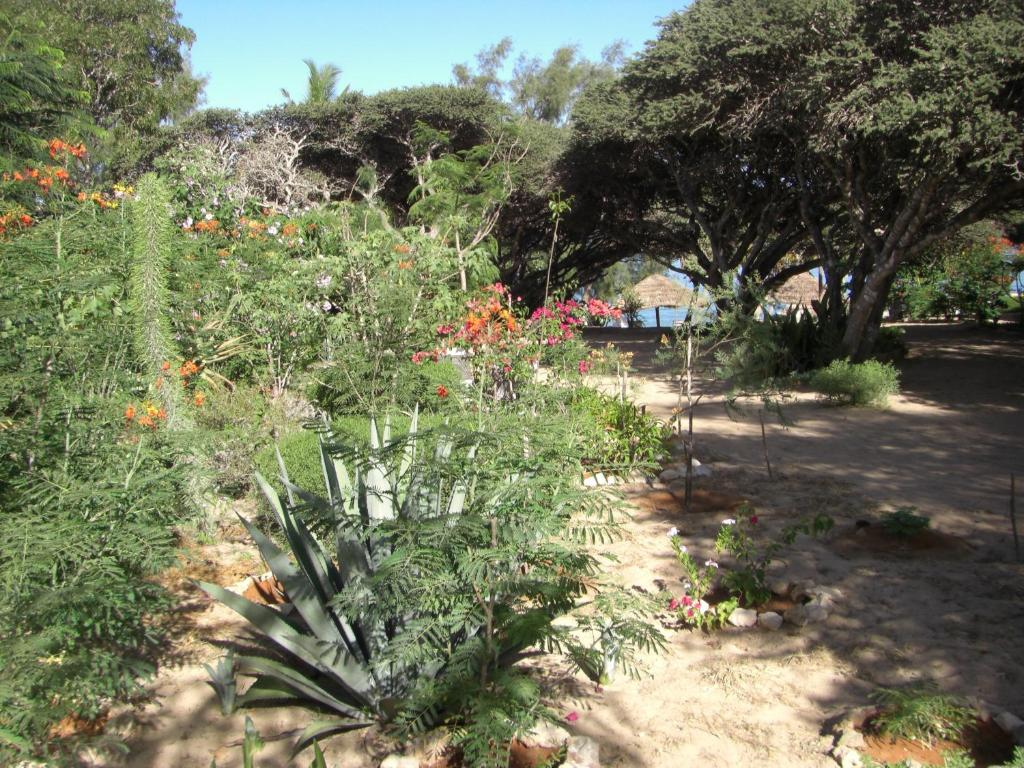Le jardin de l 39 isle ifaty for Jardin tecina booking