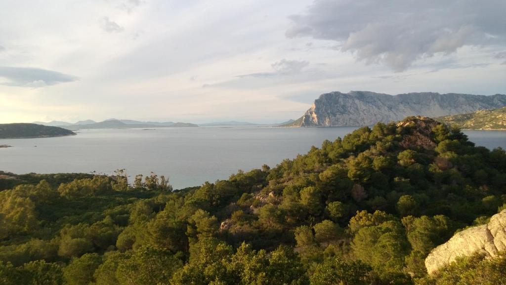 Appartamenti costa est sardinia italia porto san paolo for Appartamenti sardegna