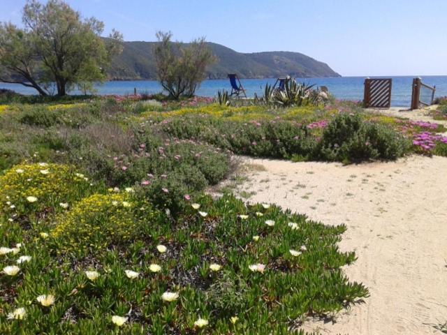 Appartamento il giardino di sabbia italia lacona - Sabbia per giardino ...