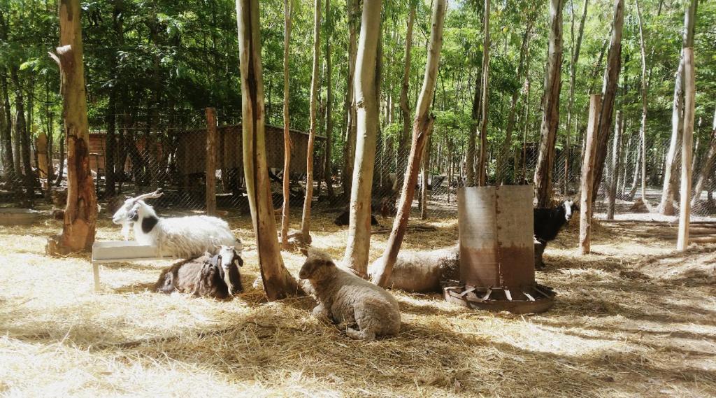 Casa de vacaciones casita en el bosque argentina ramallo - Alojamientos en el bosque ...