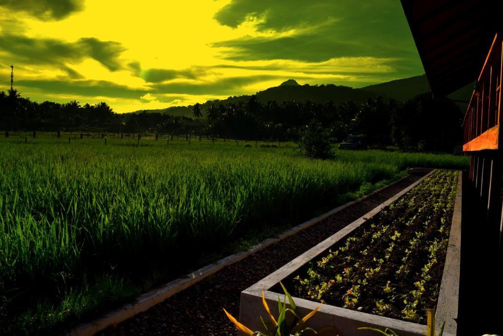 <div data-et-view=NAFQCDCcdXDPdFO:1</div Guerrera Rice Paddy Villas