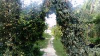 La senda del Mamut