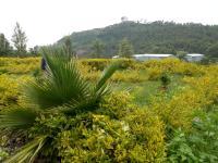 Herfazy Resort
