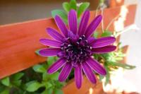 Garden Fiorella