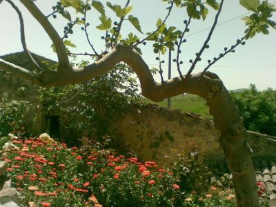 Antico Borgo B&B - Petralia Soprana - Foto 27