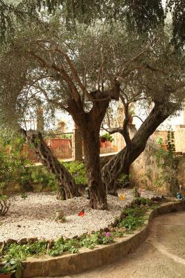 B&B Villa Casablanca - Pergusa - Foto 45