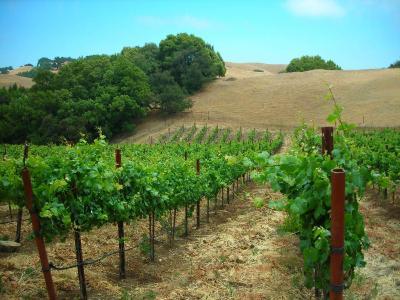 Asuncion Ridge Vineyards And Inn Paso Robles CA