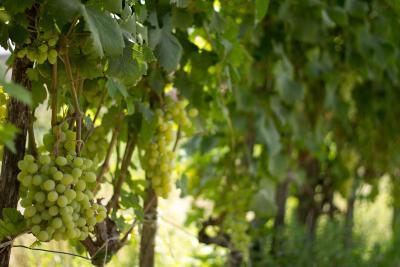 Agriturismo Il Gelsomino Ritrovato - Milazzo - Foto 20