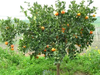 Agriturismo Baglio Donna Santa - Dattilo - Foto 2