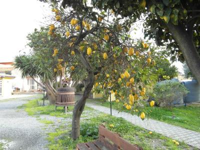 Agriturismo Il Gelsomino Ritrovato - Milazzo - Foto 38