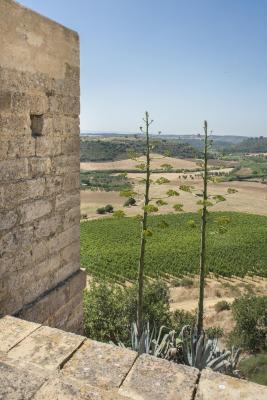 Wine Relais Feudi Del Pisciotto - Niscemi - Foto 31