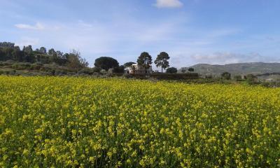 Agriturismo Feudo Muxarello - Aragona - Foto 30