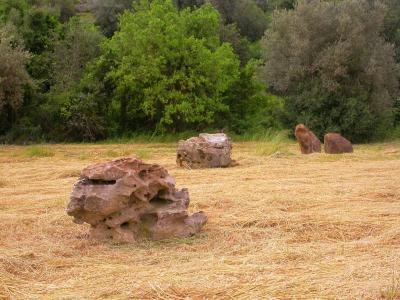 Relais Parco Cavalonga - Donnafugata - Foto 2