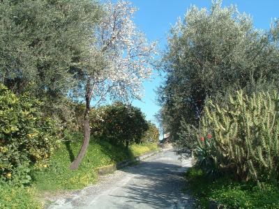 Antico Borgo Agriturismo - Calatabiano - Foto 18