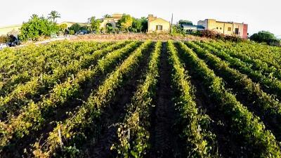 Hotel Baglio Oneto Resort and Wines - Marsala - Foto 2