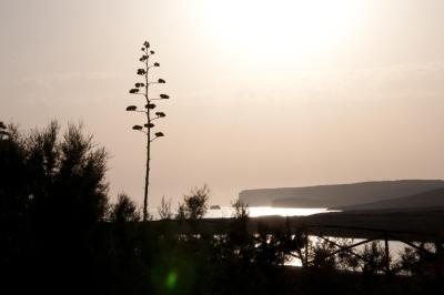 Cala Madonna Club Resort - Lampedusa - Foto 5