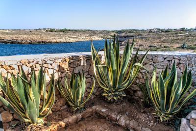 Cala Madonna Club Resort - Lampedusa - Foto 17