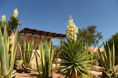 Cala Madonna Club Resort - Lampedusa - Foto 40