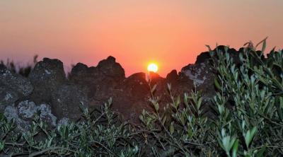 Ilha Preta Bed & Breakfast - Pantelleria - Foto 39