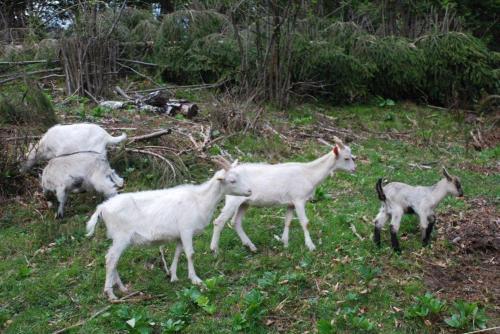 Farm Stay Dolinar Krainer
