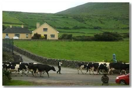 Garveys Farmhouse B&B
