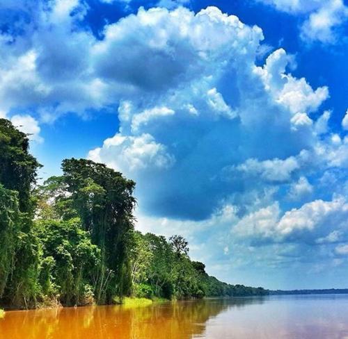 Bufeo Colorado Amazonas