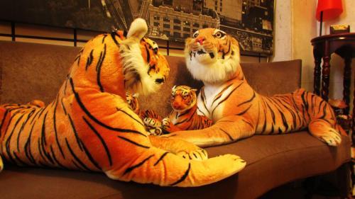 三隻老虎青年旅館