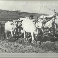 Agriturismo Massoserpente