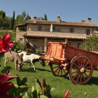 Farm stay Il Carro del Colle