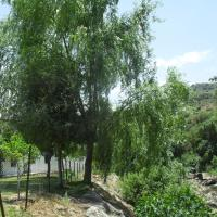 Turismo Grazalema Natural Park